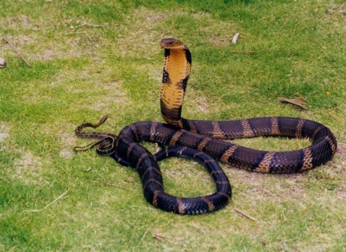 天机榜|中国十大毒蛇排行榜